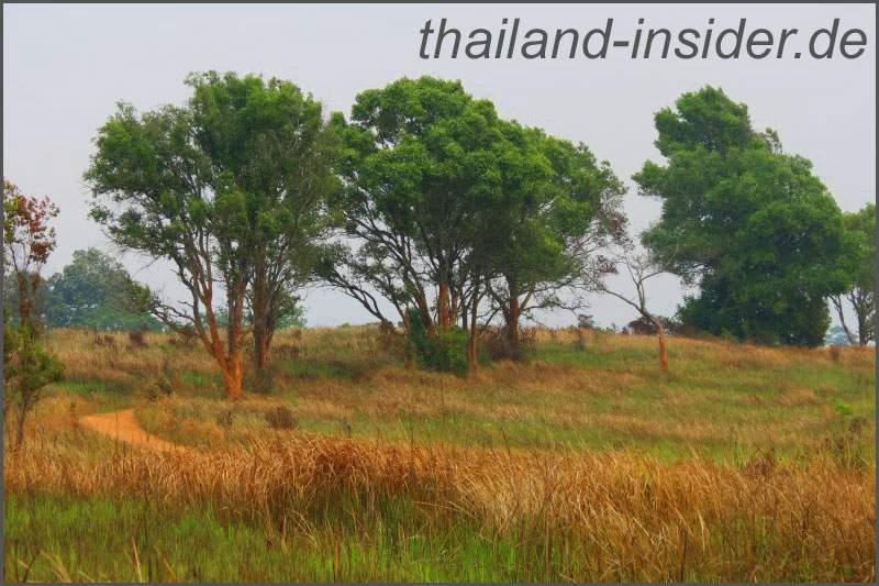 Ausblick im Khao Yai Nationalpark