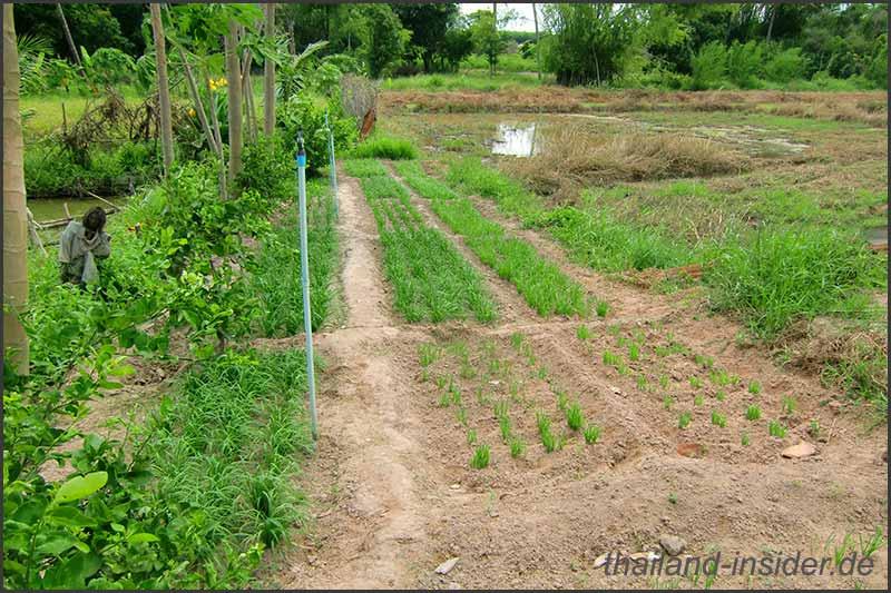 Satons Farm